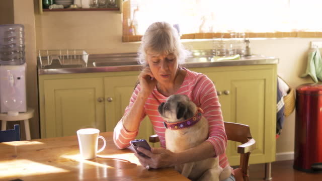 senior woman looking at her cell phone with her pet dog - mature women stock videos & royalty-free footage