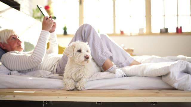 seniorin liegt mit maltesischem hund im bett - streicheln stock-videos und b-roll-filmmaterial