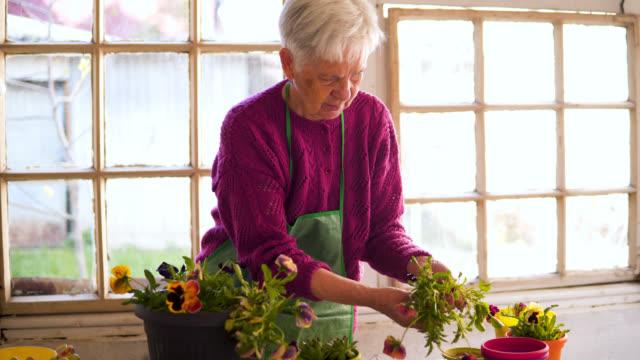 植木鉢に花を植える年配の女性 - 園芸学点の映像素材/bロール