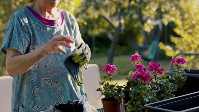 senior woman planting flowers in pots in her garden - gartenhandschuh stock-videos und b-roll-filmmaterial