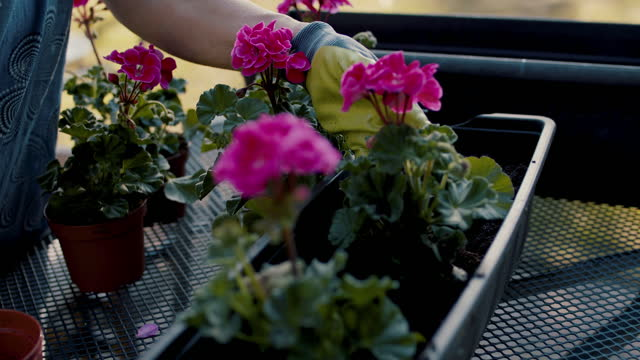senior woman planting flowers in pots in her garden - soil stock videos & royalty-free footage
