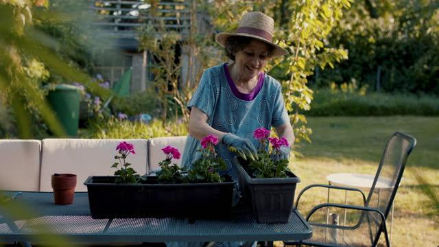 senior woman planting flowers in pots in her garden - gardening stock videos & royalty-free footage
