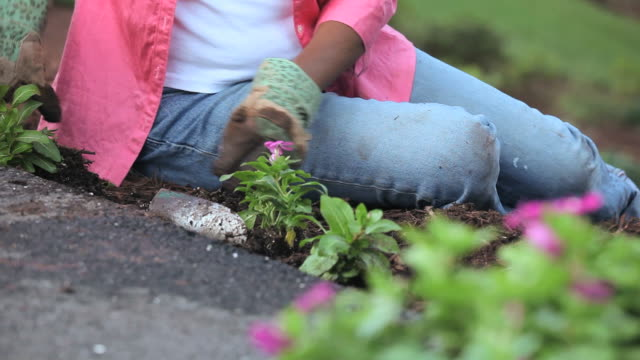 CU Senior woman planting flowers plant in garden, mid section, Richmond, Virginia, USA