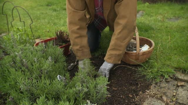 vidéos et rushes de ms tu senior woman planting in garden / stowe, vermont, usa - jardiner