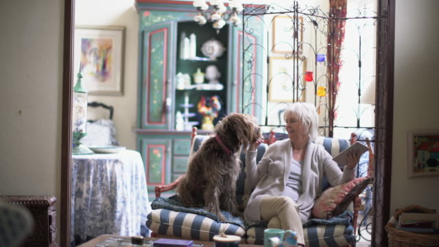 ws senior woman playing with her dog at home - pensionierung stock-videos und b-roll-filmmaterial