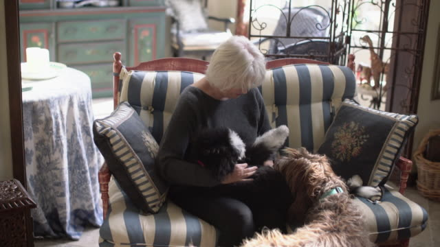 vídeos y material grabado en eventos de stock de ms senior woman playing with her puppy at home - two animals