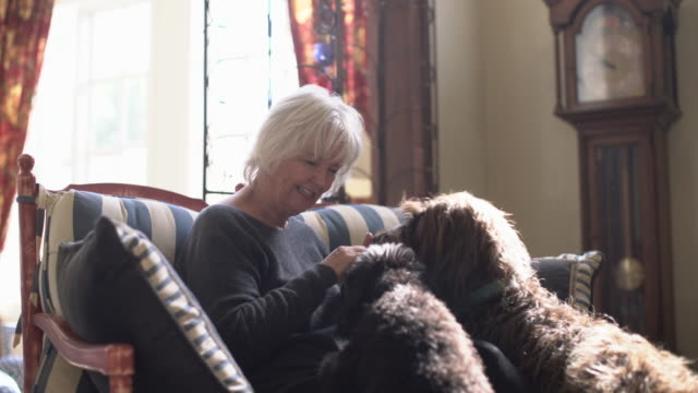 Senior woman playing with her two dogs at home
