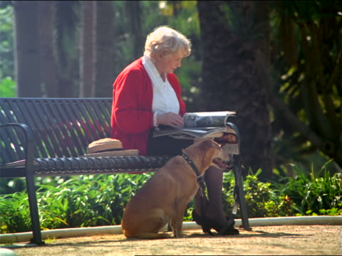 senior woman reading fashion magazine on park bench with dog by side - sitzbank stock-videos und b-roll-filmmaterial