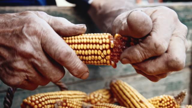 cu senior woman shucking corn - husking stock videos & royalty-free footage