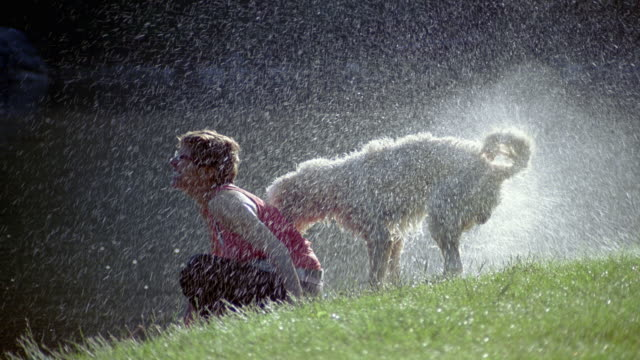 SLO MO, MS, Senior woman sitting  on lawn, dog shaking off water, Dorset, Vermont, USA