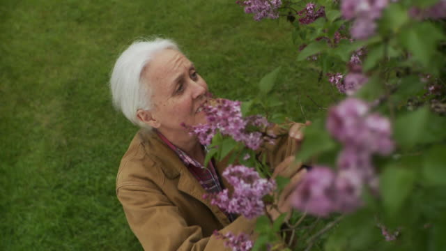 ms senior woman smelling flowers / stowe, vermont, usa - smelling stock videos and b-roll footage