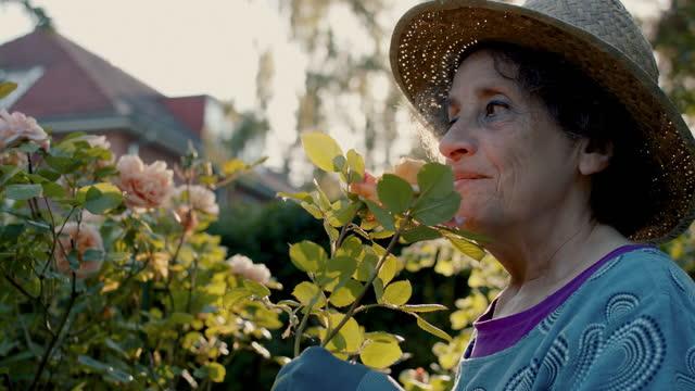 senior woman smelling roses in her garden - senior women stock videos & royalty-free footage