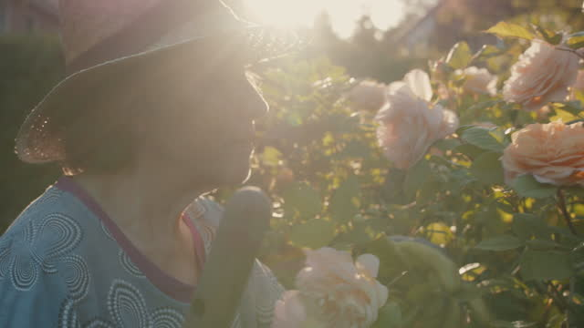 senior woman smelling roses in her garden - landscaped stock videos & royalty-free footage
