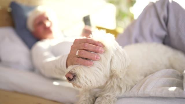 seniorin, die morgens im bett mit hund und smartphone - streicheln stock-videos und b-roll-filmmaterial