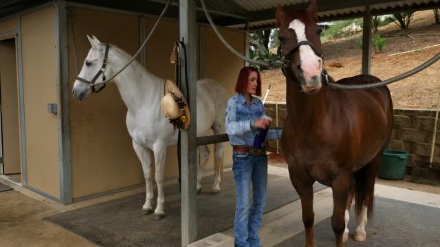 ms senior woman spraying repellant on horse before early morning trail ride - 虫除け点の映像素材/bロール