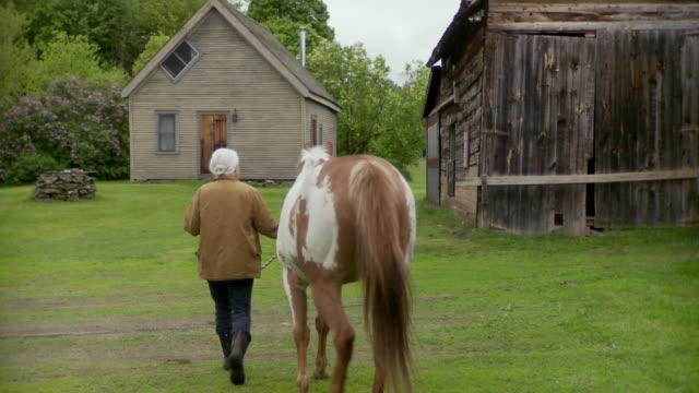 vídeos de stock, filmes e b-roll de ws pan senior woman stroking horse in farm / stowe, vermont, usa     - acariciando