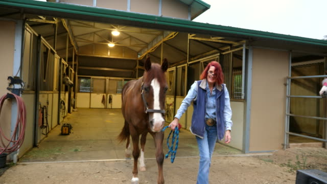 ms senior woman taking horse out of barn before early morning ride - barn stock videos & royalty-free footage