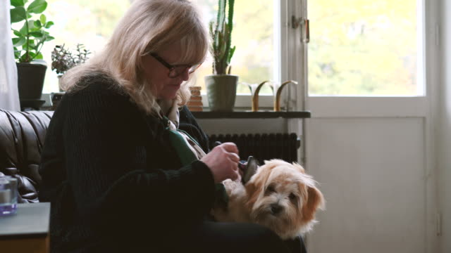 Senior woman talking while grooming dog in domestic room at home