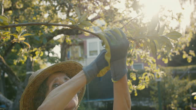 senior woman trimming tree in her garden - limb body part stock videos & royalty-free footage