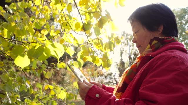 Senior woman using digital PC in a park