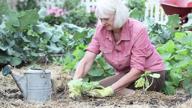 senior woman vegetable gardening - gemeinschaftsgarten stock-videos und b-roll-filmmaterial