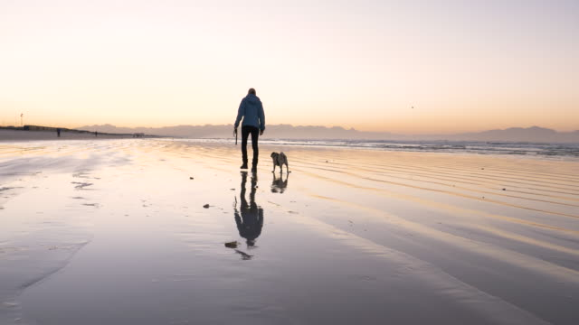senior woman walking her dog on the beach at dawn - one senior woman only stock videos and b-roll footage