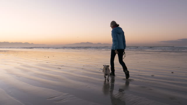 senior woman walking her dog on the beach at dawn - solitude stock videos & royalty-free footage