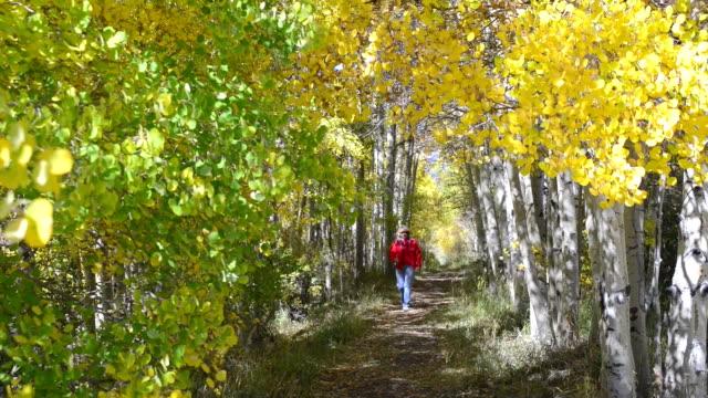 senior woman walking through aspen tree tunnel - aspen tree stock videos and b-roll footage