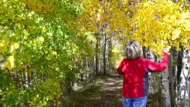 senior woman walking through aspen tree tunnel - aspen tree stock videos & royalty-free footage