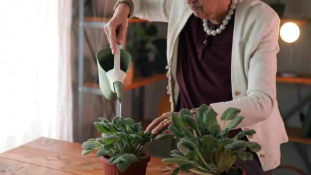 vídeos y material grabado en eventos de stock de senior mujer regando flores - parterre