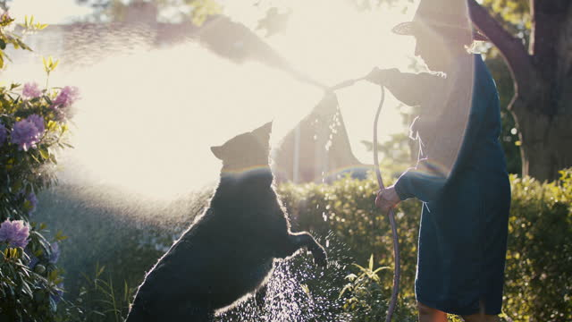 senior woman watering plants in her garden with dog - hobbies stock videos & royalty-free footage