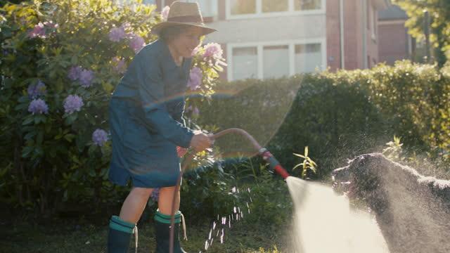 vídeos de stock, filmes e b-roll de senior woman watering plants in her garden with dog - molhado