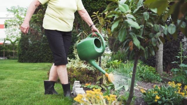 senior kvinna vattning växter - vattna bildbanksvideor och videomaterial från bakom kulisserna