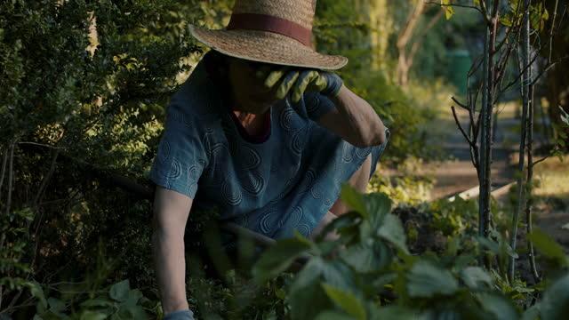 senior woman weeding flower bed in her garden - gartenhandschuh stock-videos und b-roll-filmmaterial