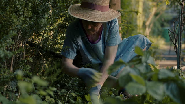 senior woman weeding in her garden - gartenhandschuh stock-videos und b-roll-filmmaterial