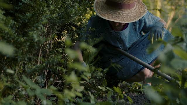 senior woman weeding in her overgrown garden - gartenhandschuh stock-videos und b-roll-filmmaterial