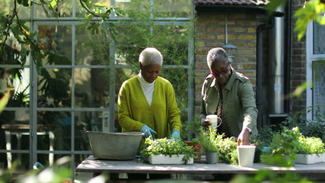 vidéos et rushes de senior woman with friend potting plant and talking in garden at home - jardiner