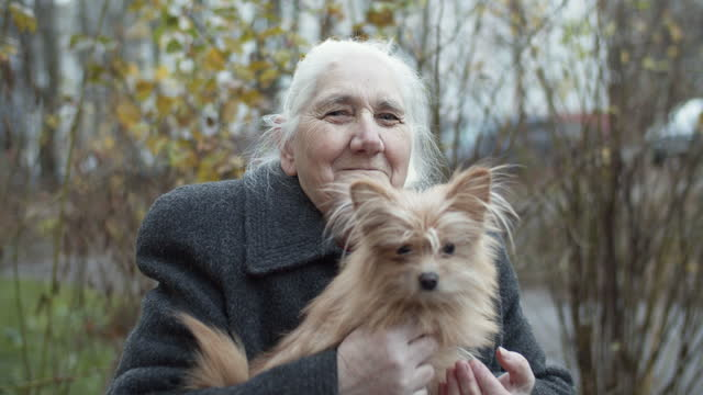 senior woman with her dog outdoors - stroking stock videos & royalty-free footage