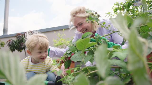 vídeos de stock, filmes e b-roll de mulher sênior com seu neto que jardina junto - jardim