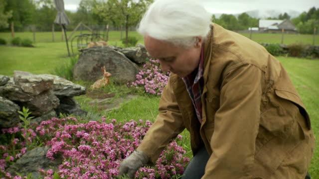 MS Senior woman working in garden / Stowe, Vermont, USA