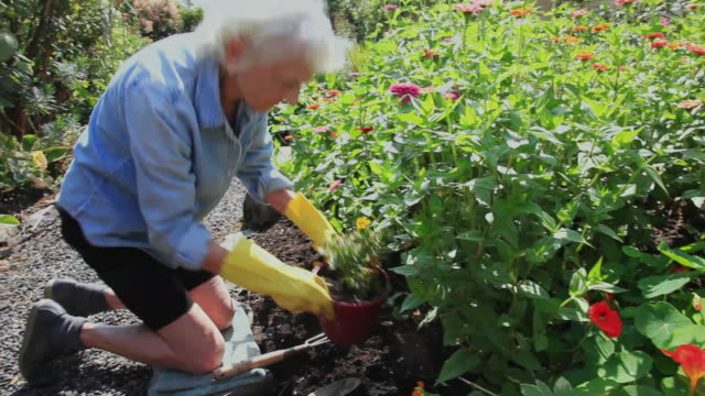 ms senior woman working in her garden / portland, oregon, usa - giardinaggio video stock e b–roll