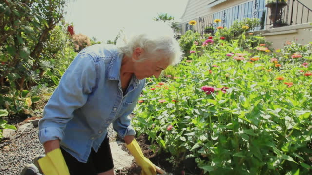 WS Senior woman working in her garden / Portland, Oregon, USA