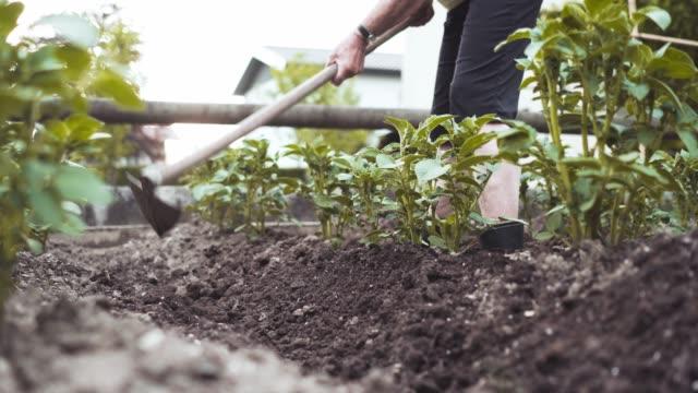 vídeos de stock, filmes e b-roll de mulher sênior trabalhando no jardim - processo vegetal