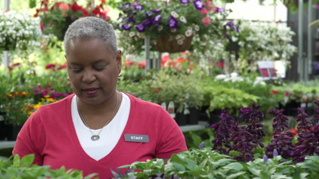 senior woman working with a tablet in a greenhouse - whidbey island shop stock videos and b-roll footage