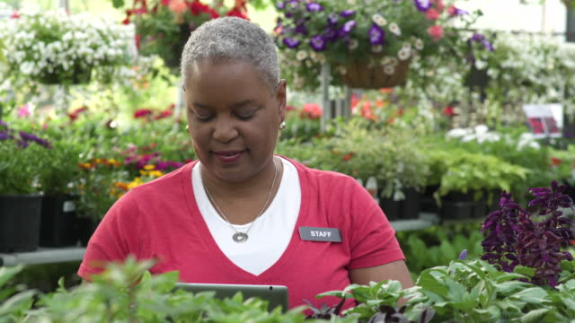 senior woman working with a tablet in a greenhouse - whidbey island stock videos and b-roll footage