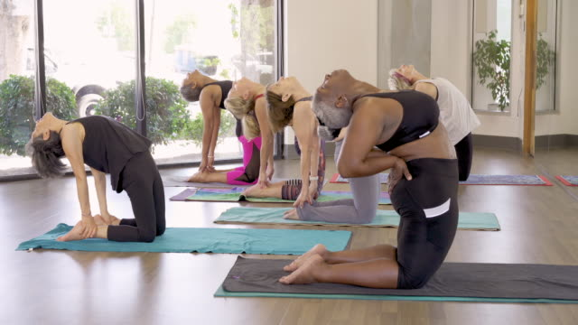 senior women stretching in exercise class - health club stock videos & royalty-free footage