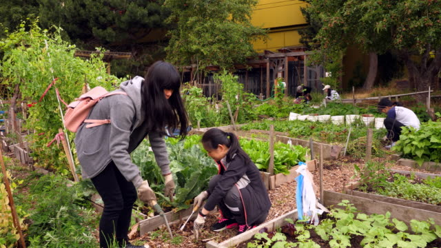 ms senior women supervising young volunteers as they work in community vegetable garden - simple living stock videos & royalty-free footage