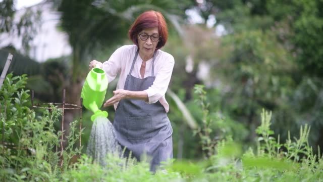 senior women watering organic garden - watering can stock videos and b-roll footage