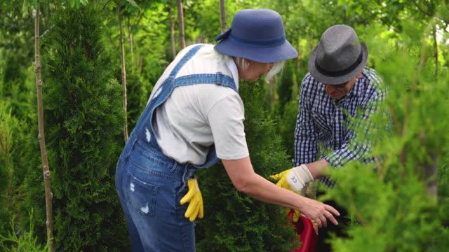 植物園のシニアワーカーが植物を調べる - 園芸学点の映像素材/bロール