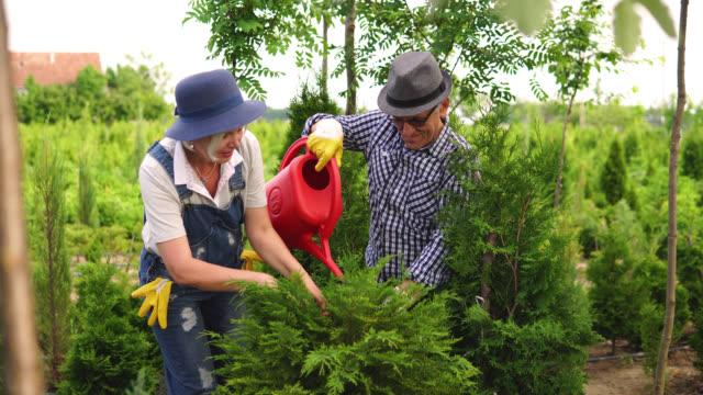 senior workers at plant nursery garden examine plants - pinaceae stock videos & royalty-free footage